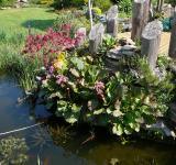 Pohled na ukázkové jezírko v našem zahradnictví, léto 2007
