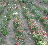 Pohled na pěstební plochy