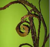 "Salix sachalinensis 'Sekka' - vrba sachalinská ""dračí vrba"""