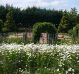 Kopretinová louka, v pozadí Ohňová zahrada