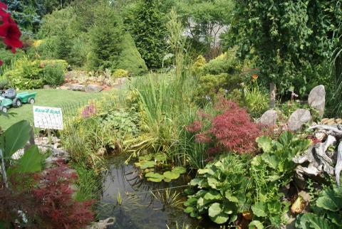 Pohled na ukázkové jezírko v našem zahradnictví v létě 2010
